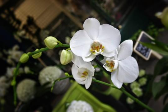 France - Flower Shop