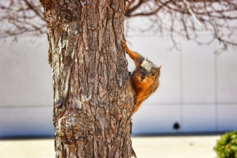 UT Dallas Squirrel
